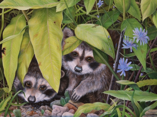 Original Oil Painting of two baby raccoons by Judy Schrader