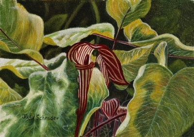 Miniature Art, Oil Painting of a jack in the pulpit by Judy Schrader