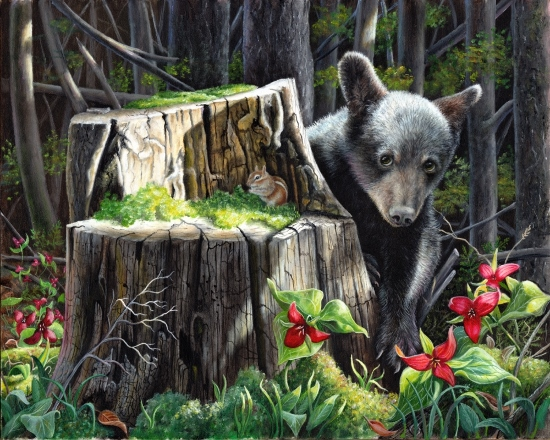 Oil Painting of a black bear cub by Judy Schrader