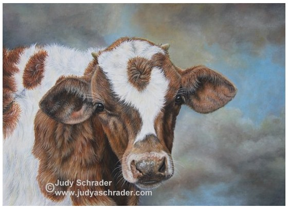 Original Oil Painting of a young longhorn by Judy Schrader
