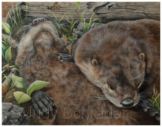 Original Oil Painting of two river otters by Judy Schrader