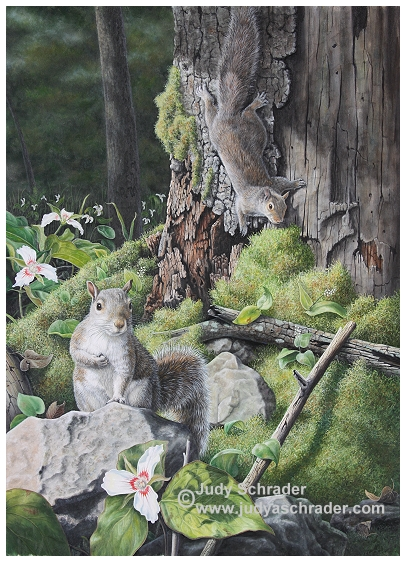 Original Oil Painting of two gray squirrels by Judy Schrader