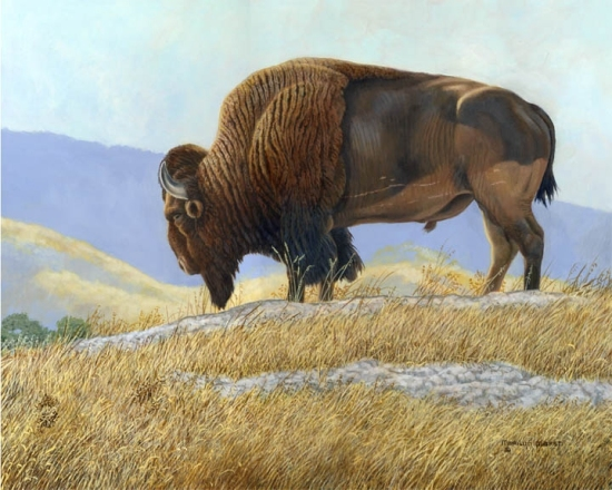 Nature Art, Nature Paintings, Wildlife Art, Wildlife Paintings, Original Acrylic Painting of an old buffalo by Marilyn Marsh