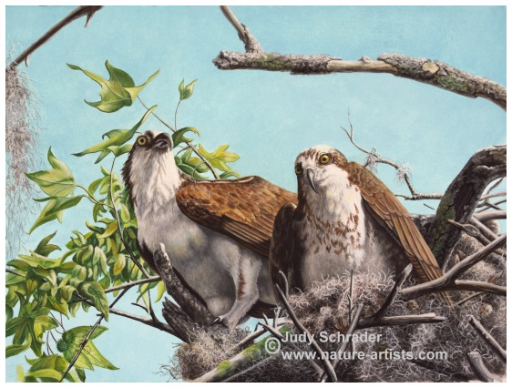 Oil Painting of a pair of ospreys by Judy Schrader