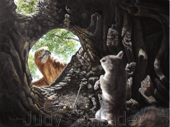 Oil Painting of of a hawk eyeing a squirrel by Judy Schrader
